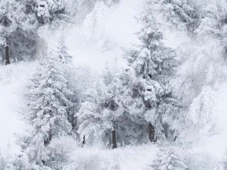 ᐈ Доброе утро природа картинки и фото утренняя природа