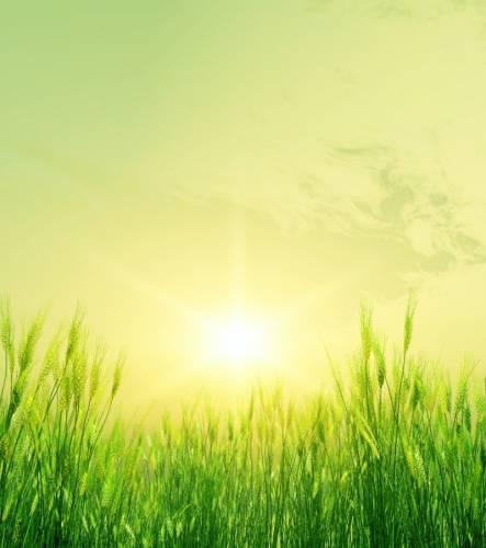 хорошие травы для похудения
