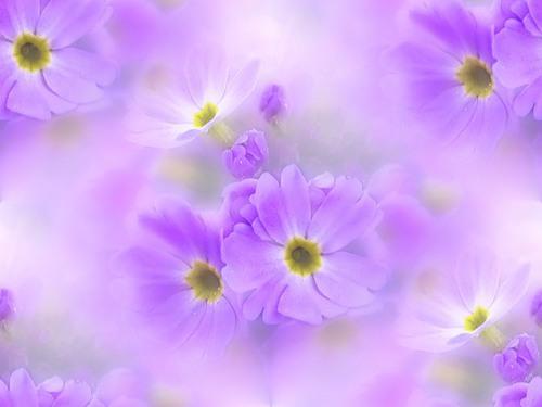 Скачать осенние цветы картинки