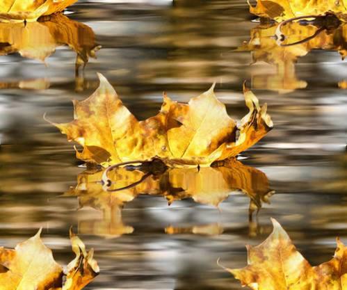 Картинки осень лужи листья