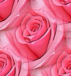Рисунки большие розы