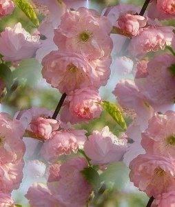 Деревья прекрасное цветение фоны