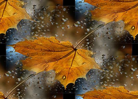 Картинки рябиновые листья