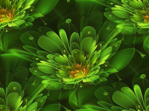 зелёные цветы фото