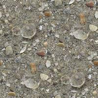 Серые Серый песок пляжа с осколками раковин фоны